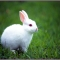Rabbit Mod AA :: V3.0